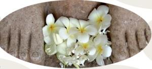 photo lotus