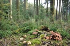 B- Forêts détails (54) - Copie